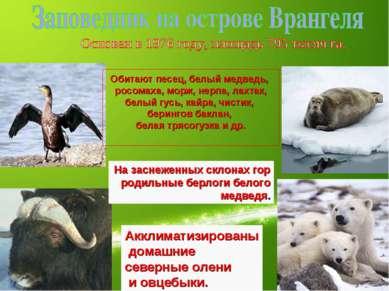Обитают песец, белый медведь, росомаха, морж, нерпа, лахтак, белый гусь, кайр...