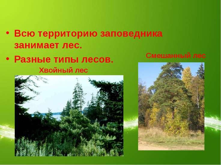 Всю территорию заповедника занимает лес. Разные типы лесов. Хвойный лес Смеша...