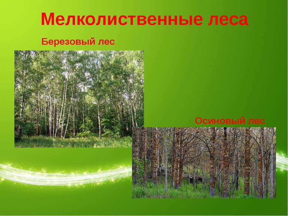 Мелколиственные леса Березовый лес Осиновый лес
