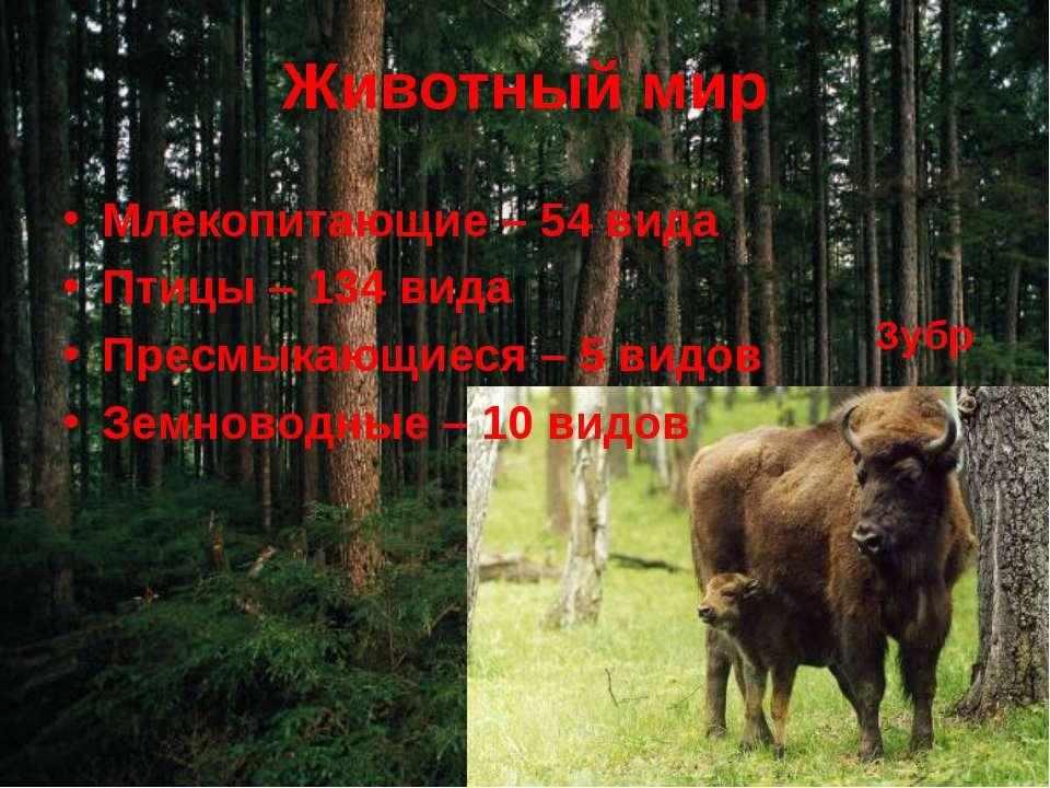 Животный мир Млекопитающие – 54 вида Птицы – 134 вида Пресмыкающиеся – 5 видо...