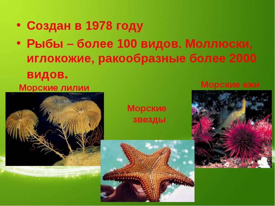 Создан в 1978 году Рыбы – более 100 видов. Моллюски, иглокожие, ракообразные ...
