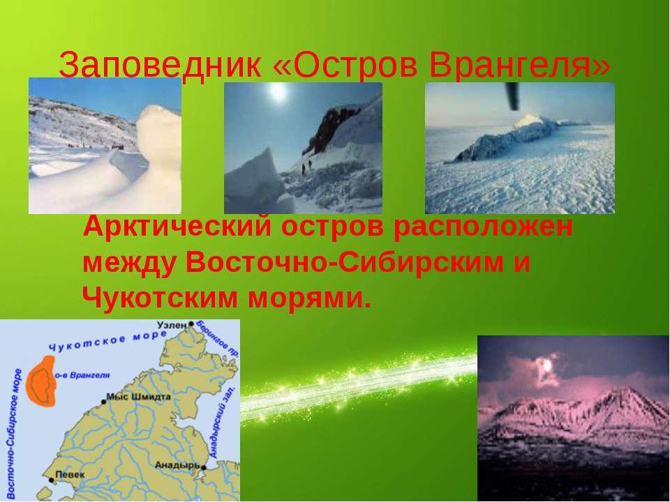 Заповедник «Остров Врангеля» Арктический остров расположен между Восточно-Сиб...