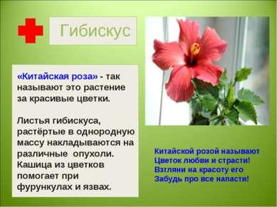 Гибискус Китайской розой называют Цветок любви и страсти! Взгляни на красоту ...