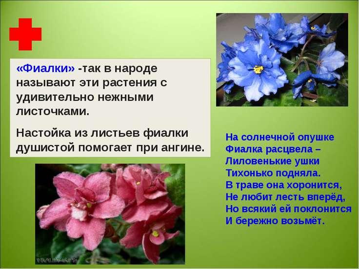 «Фиалки» -так в народе называют эти растения с удивительно нежными листочками...