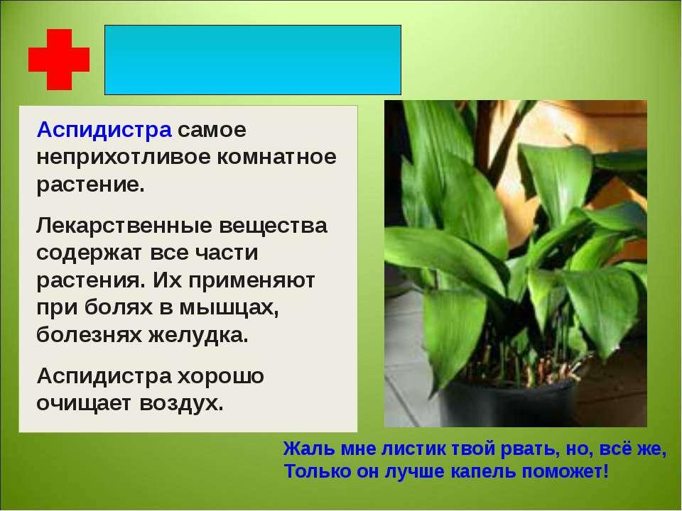 Аспидистра самое неприхотливое комнатное растение. Лекарственные вещества сод...