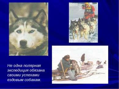 Не одна полярная экспедиция обязана своими успехами ездовым собакам.