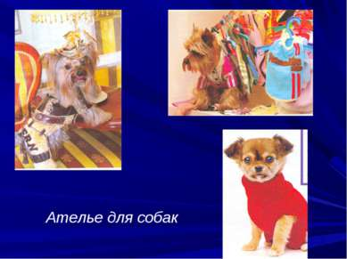 Ателье для собак