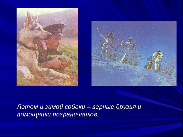Летом и зимой собаки – верные друзья и помощники пограничников.