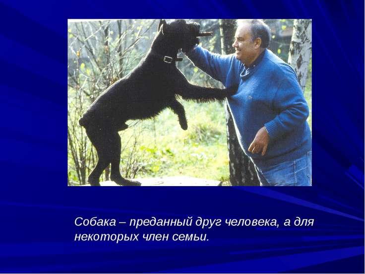 Собака – преданный друг человека, а для некоторых член семьи.