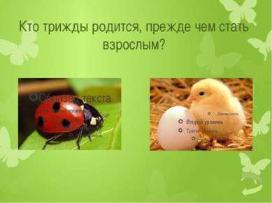 Какой тип развития у майского жука?