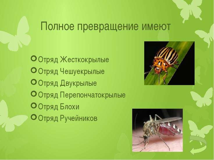 Развитие с неполным превращением Яйцо Личинка Взрослое насекомое