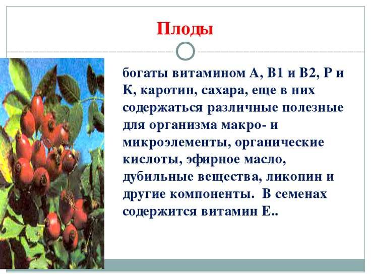 Плоды богаты витамином А, В1 и В2, Р и К, каротин, сахара, еще в них содержат...