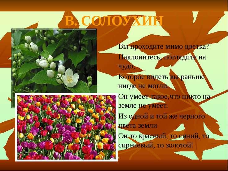 В. СОЛОУХИН Вы проходите мимо цветка? Наклонитесь, поглядите на чудо, Которое...
