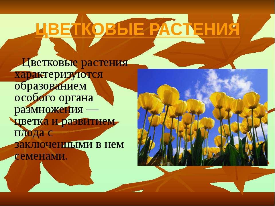 ЦВЕТКОВЫЕ РАСТЕНИЯ Цветковые растения характеризуются образованием особого ор...