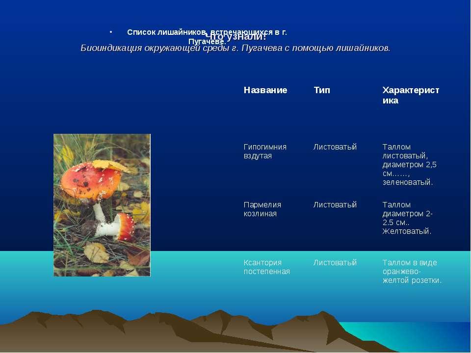 Что узнали! Биоиндикация окружающей среды г. Пугачева с помощью лишайников. С...