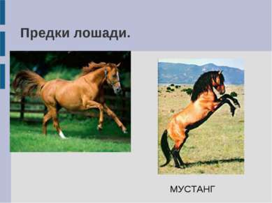 Предки лошади. МУСТАНГ
