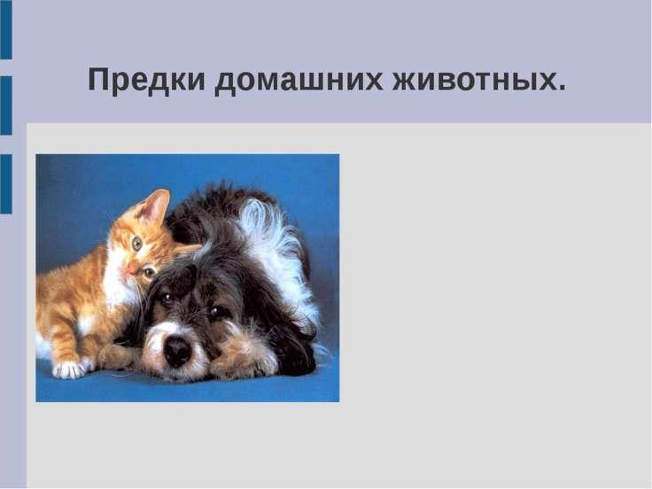 Предки домашних животных.