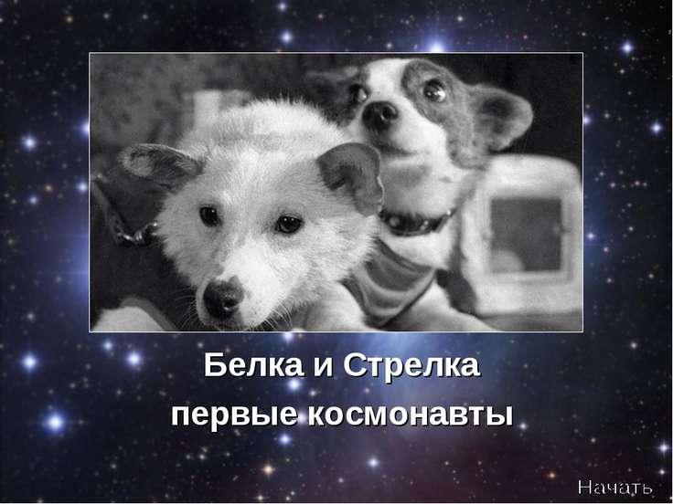 Белка и Стрелка первые космонавты