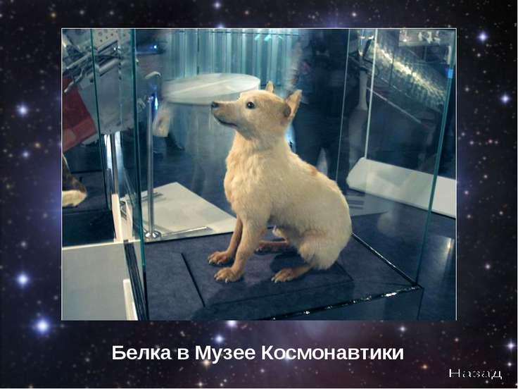 Белка в Музее Космонавтики