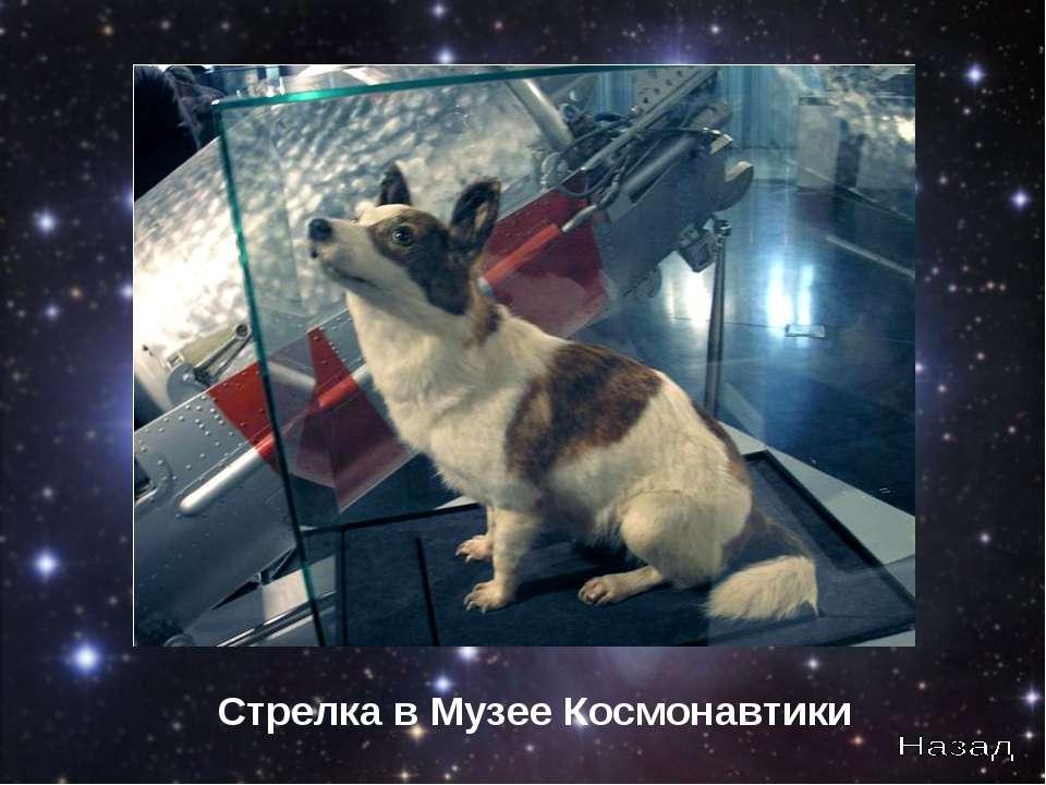 Стрелка в Музее Космонавтики