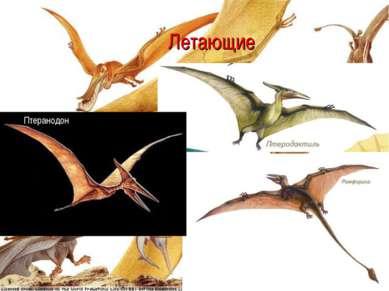 Летающие Птеранодон