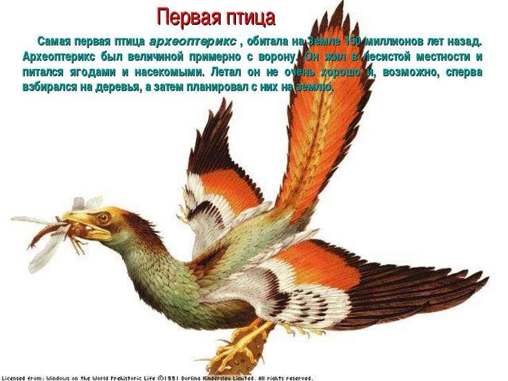 Первая птица Самая первая птица археоптерикс , обитала на Земле 150 миллионов...
