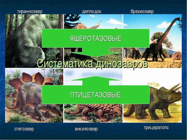 Систематика динозавров тираннозавр диплодок брахиозавр стегозавр анкилозавр т...