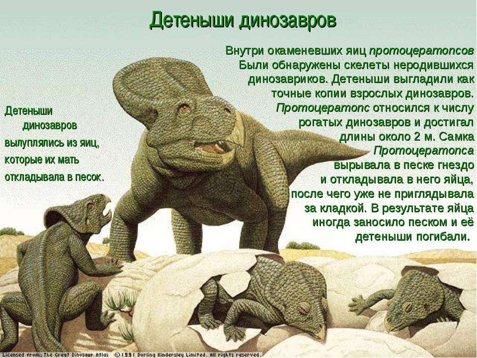Детеныши динозавров Детеныши динозавров вылуплялись из яиц, которые их мать о...