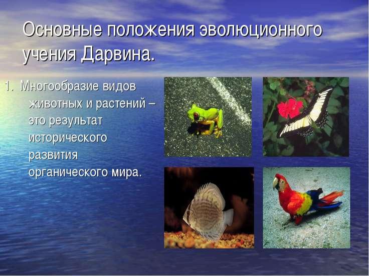 Основные положения эволюционного учения Дарвина. 1. Многообразие видов животн...