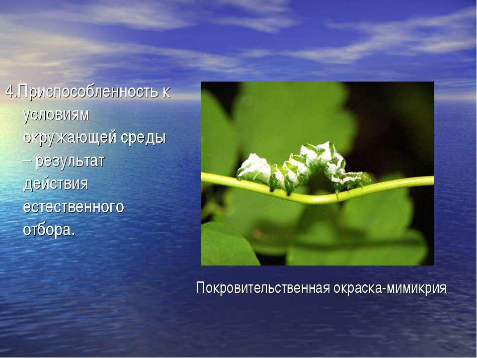 4.Приспособленность к условиям окружающей среды – результат действия естестве...