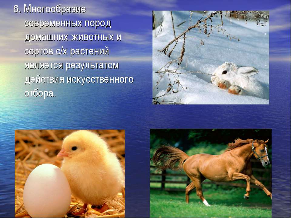 6. Многообразие современных пород домашних животных и сортов с/х растений явл...