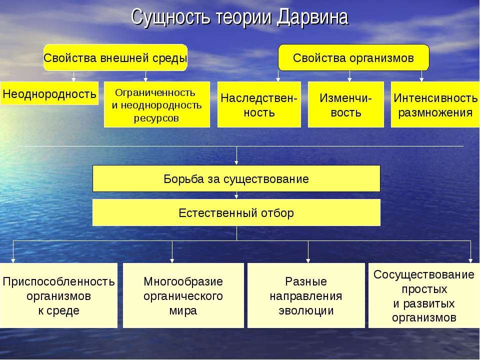 Сущность теории Дарвина Свойства внешней среды Свойства организмов Неоднородн...