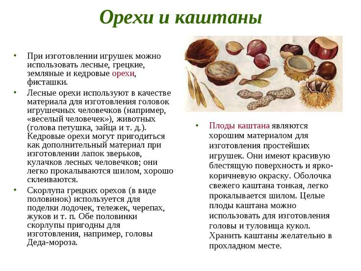 Орехи и каштаны При изготовлении игрушек можно использовать лесные, грецкие, ...