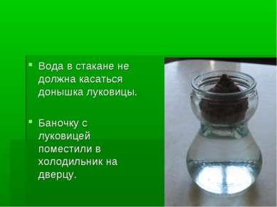 Вода в стакане не должна касаться донышка луковицы. Баночку с луковицей помес...