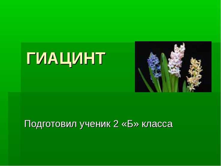 ГИАЦИНТ Подготовил ученик 2 «Б» класса