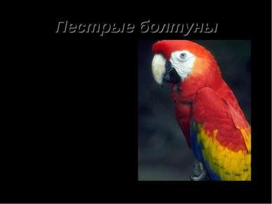 Пестрые болтуны Попугаи очень забавны. Самым разговорчивым всегда считались к...
