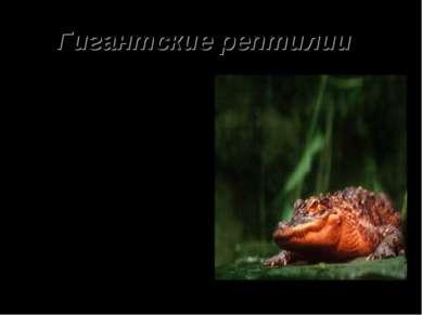 Гигантские рептилии Крокодилы – одни з самых древних жителей нашей планеты. С...
