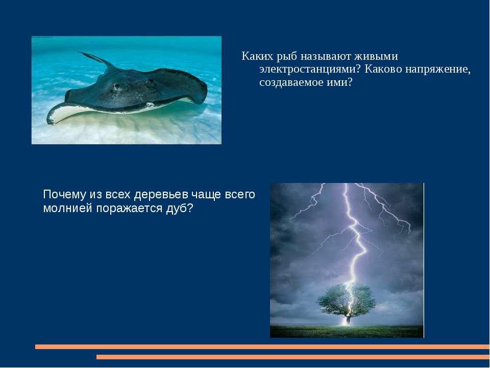 Каких рыб называют живыми электростанциями? Каково напряжение, создаваемое им...