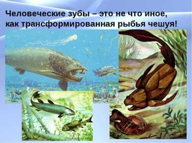 Человеческие зубы – это не что иное, как трансформированная рыбья чешуя!