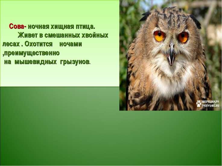 Сова- ночная хищная птица. Живет в смешанных хвойных лесах . Охотится ночами ...