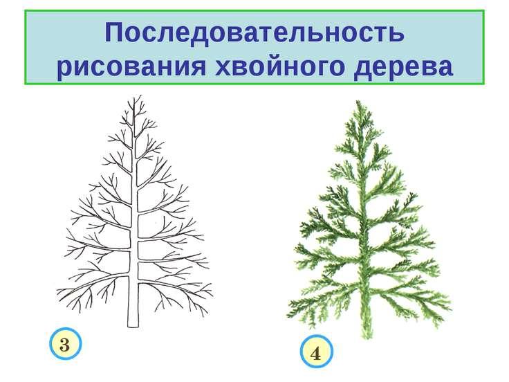 Последовательность рисования хвойного дерева