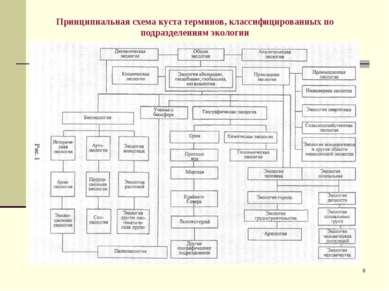 * Принципиальная схема куста терминов, классифицированных по подразделениям э...