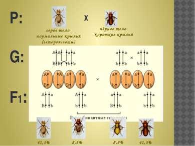Р: G: F1: Х серое тело нормальные крылья (гетерозиготы) чёрное тело короткие ...