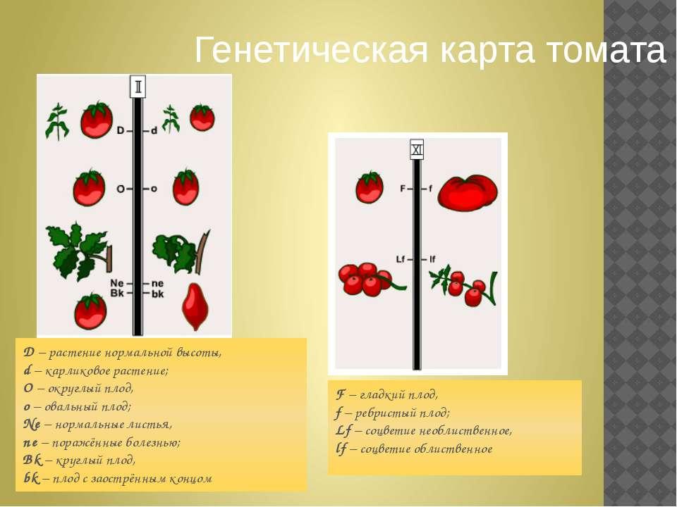F– гладкий плод, f– ребристый плод; Lf– соцветие необлиственное, lf– соцв...