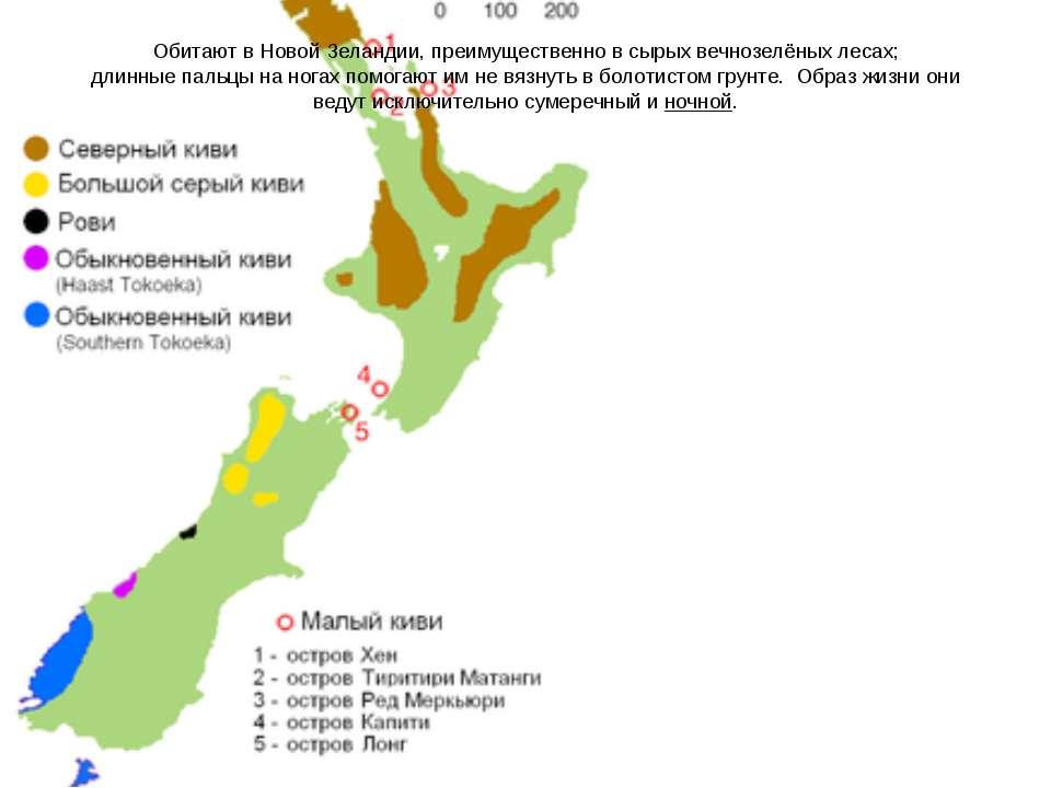 Обитают в Новой Зеландии, преимущественно в сырыхвечнозелёных лесах; длинные...