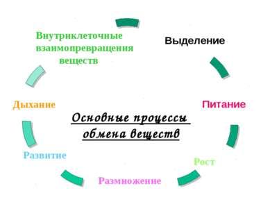 Основные процессы обмена веществ Внутриклеточные взаимопревращения веществ