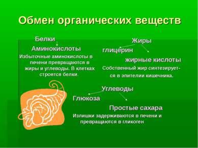 Обмен органических веществ Белки Аминокислоты Избыточные аминокислоты в печен...