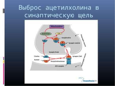 Выброс ацетилхолина в синаптическую щель