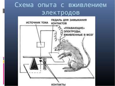 Схема опыта с вживлением электродов