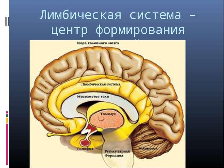 Лимбическая система – центр формирования эмоций